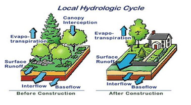 Local Hydrologic Cycle